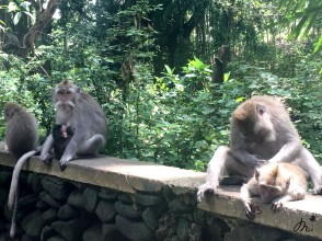 Sacred Monkey Forest