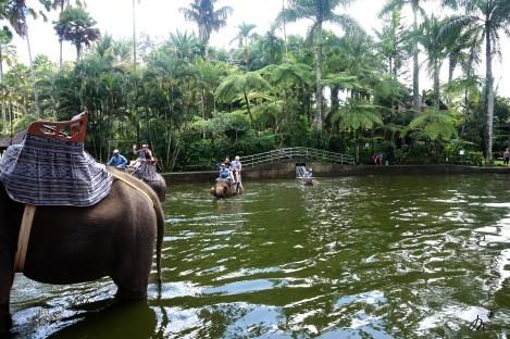 L'Elephant Safari Park