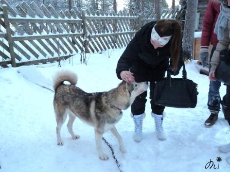Husky Park - Rovaniemi