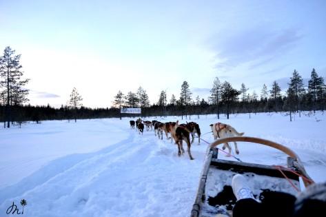 Balade - Husky Park - Rovaniemi